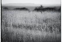 Mes photos de nature / Vagabondages champêtres.....
