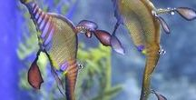 animali marini 1 / animali marini
