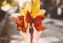 Autumn / Autumn inspiration.