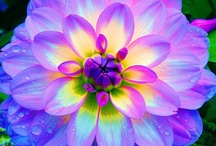 Beautiful Flowers / Beautiful flowers of all types.
