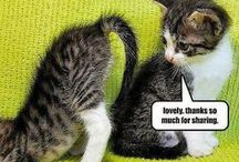 funny  animals / it is very funny