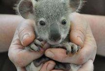 cute baby animals / cute