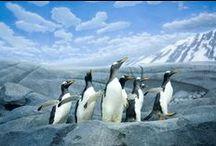 Das Pinguin-Prinzip / Wer sich Veränderungen stellt und sie erfolgreich meistert kann Großes erreichen! - John Kotter, Das Pinguin-Prinzip