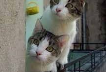 CATS...Big or small I love them all / all things cats / by Crissie Cirelli