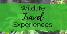 Wildlife Travel Experiences / A board for animal lovers! If you wildlife is a big focus during your travels you'll love these pins. Offering inspiration for animal experiences and adventures and discover where you can get up close and personal to some of the worlds most wonderful creatures!