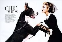 ads&dogs