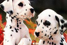 Baby Animals / Baby animals make everything better