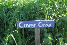 How to pick a cover crop