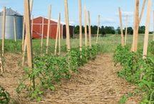 Suppress Weeds - Lets Talk Cover Crops