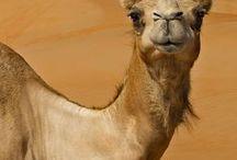 ANIMALS / Animal photos and photomanips. Weird, huh?