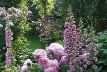 In the garden / by Emily's Garden