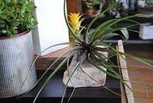 Hip House Plants / house plants / by Stems Flower Shop Dore Huss