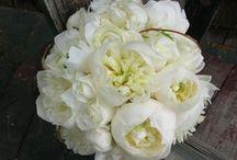 White & Cream Bouquets / Bridal bouquets / by Stems Flower Shop Dore Huss