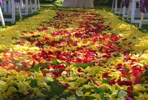 Wedding ceremony and aisles / by Stems Flower Shop Dore Huss