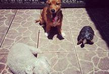 My Pets / Família de patas!!