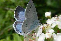Butterflies / by Linda Slater