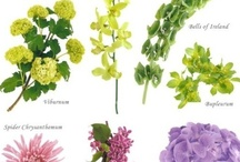 Flower Varieties  / by Stems Flower Shop Dore Huss