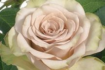 Rose Colors / Rose colors and varieties / by Stems Flower Shop Dore Huss