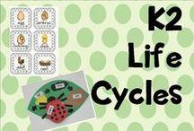 K 2 life cycles