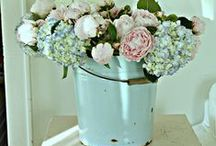 Shabby Chic / by Hyacinth Bluegrass