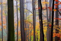 Into the woods....... / I love the woods ......