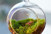 Terrariums / A terrarium is a container designed to hold small plants in controlled conditions. Terrariums help bring greenery to indoor spaces.