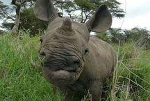 - rhinos
