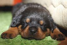 Sleeping Beauties:)