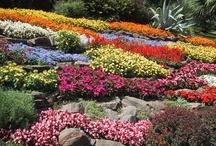 porches y jardines/ / Garten, Garden,Jardin...  El espacio que separa el mundo exterior de la habitación humana merece un tratamiento epecial  / by Primera Primogenita
