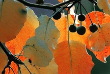 Season - Autumn / by Ginny K