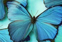 Blue Colour Crush