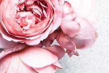 Pink Colour Crush