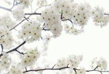 White colour crush