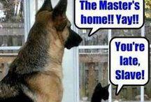 cat \ dog