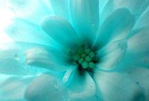 Turquoise Colour Crush