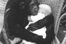 Our Animal Friends & Relatives / by Carolyn Newsom