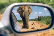 Wildlife / In Zuid-Afrika bestaat het nog: Wildlife!   Mooie dieren en beesten