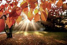 Herfst / Alles wat de herfst mooi maakt.