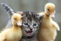 Animais fofos !!