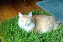 Cat stuff / Cat