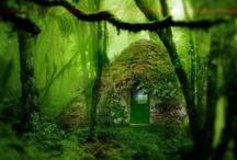 Unusual Forest-y things