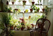 Diseño y decoración vegetal