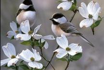 Birds  **Vogels**