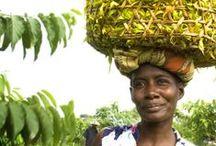 Madagaskar - Handwerk, Produkte und Kultur / Madaskar ist ein Land der Bastler und Handwerker, der Kulturellen Riten und religiösen Bräuche, der Tabus und Gesänge...bis heute werden all diese Traditionen gelebt und mit Würde weitergetragen.