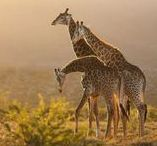Eastern Cape Safaris / Game reserves, national parks, wildlife and safaris in the Eastern Cape, South Africa