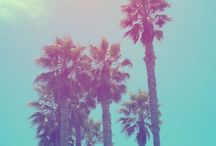 summertime. / Palm Trees. Ocean Breeze. Salty Air. Sun Kissed Hair. Endless Summer. Take me there.