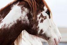Horses... / by Anne De l'Eden Angel