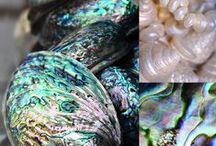 Paua Shell / Amazing Hand-Crafted Jewelry by Offerings Sajen Featuring the Lovely Paua Shell