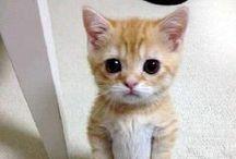 Animals / cute :-)