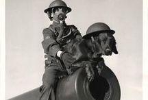ANIMALS IN THE WAR / by Lisa Deckert